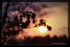 Foto-pstryk nad Iną [Kwiecień 18] 010