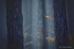 Grzybobranie [Listopad 18] 166b
