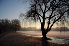Jezioro Nowogardzkie o Poranku [Styczeń 11] 015a