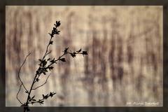 Alicja Szkołut [Kwiecień 18] 009 _Fotorgotowe