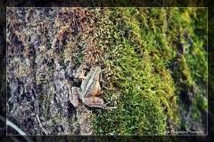 Dagmara Tomala [Kwiecień 18] 012_Fotorgotowe