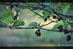 Iza Czerwonka [Kwiecień 18] 013_Fotorgotowe