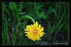 Iza Czerwonka [Kwiecień 18] 015_Fotorgotowe