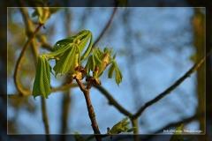 Oliwia Stawinoga [Kwiecień 18] 046_Fotorgotowe