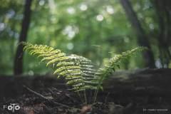 FOTO-Przygoda-w-Świdwinie-Wiosna-19-0387b