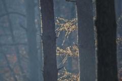 Grzybobranie-Listopad-18-089bgotowe