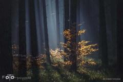 Grzybobranie-Listopad-18-200bgotowe