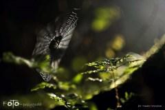 Spacery-Jesień-14-026bgotowe