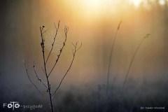 W-Lesie-Wiosna-15-027bgotowe
