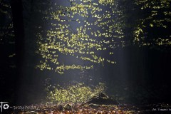 W-Lesie-Wiosna-15-079bgotowe