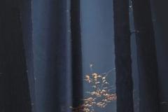 Grzybobranie [Listopad 18] 175b