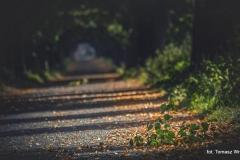 Przyroda - Krajobraz 047