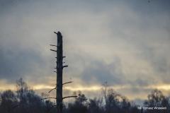 Przyroda - Krajobraz 066
