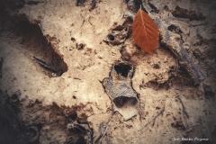 Plener w Podlipcach - Beata Pryma [Listopad 18] 061b