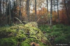 Plener w Podlipcach - Beata Pryma [Listopad 18] 071b