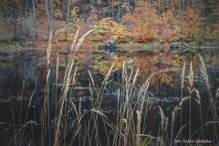 Plener w Podlipcach - Julia Igielska [Listopad 18] 009b