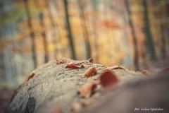 Plener w Podlipcach - Julia Igielska [Listopad 18] 056b