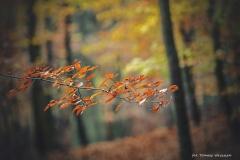 Plener w Podlipcach - Reportaż [Listopad 18] 063a