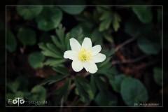 Alicja-Szkołut-Kwiecień-18-006-_Fotor