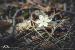 FOTO-Przygoda-w-Świdwinie-Wiosna-19-Katarzyna-Goździela-009a