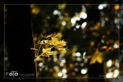 FOTO-Pstryk-w-plenerze-Dolina-Rzeki-Iny-Maj-18-Bożena-Opatowicz-008_Fotor