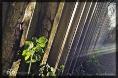 Julia-Brauman-Kwiecień-18-038_Fotor
