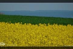 Lila-Boczkowska-Kwiecień-18-318_Fotor