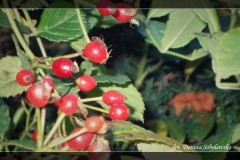 Danuta Sobolewska [Zdjęcia Plenerowe] 002