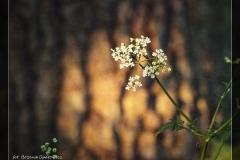 Bożena Opatowicz - dolina rzeki Iny [Maj 18] 002_Fotorgotowe