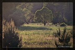 Bożena Opatowicz - dolina rzeki Iny [Maj 18] 063_Fotoraagotowe