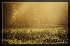 Irena Wiśniewska - dolina rzeki Iny [Maj 18] 047_Fotoraagotowe
