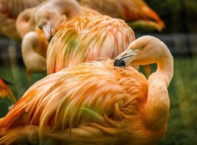 ▶ Fotografieren von Wildvögeln   unvergessliche Fotos