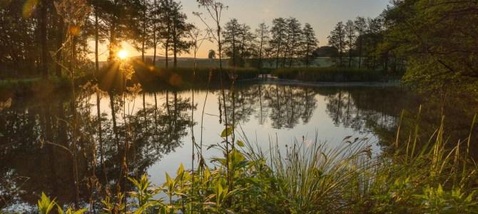 Frühmorgens am Schwanenweiher