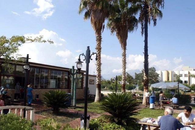 Hastane Bahçesine Yıldırım Düştü, Palmiye Ağacı Alev Aldı