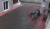 Aç Kalan Köpekler Küçük Çocuğu Kalbinin Üzerinden Isırdı! Dehşet Anları Kamerada