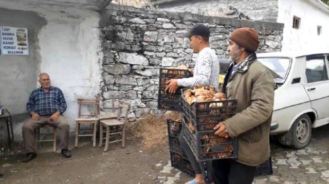 Kaz Dağları'nın altın mantarı köylünün gelir kapısı oldu
