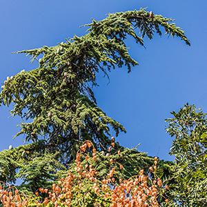 Крым. Коктебель. Дерево. Фото Николая Ефремова
