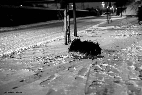 milton_20140127_snow