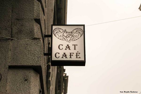 sign_20140206_catcafe