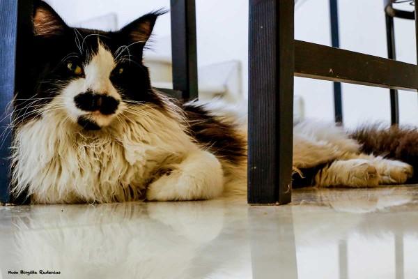 cat_20140315_2