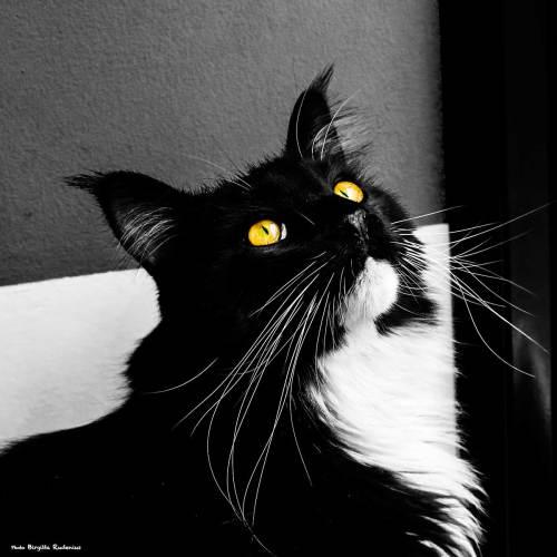 cat_20140315_bw