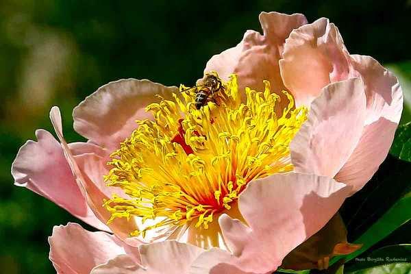 flower_20140526_bee