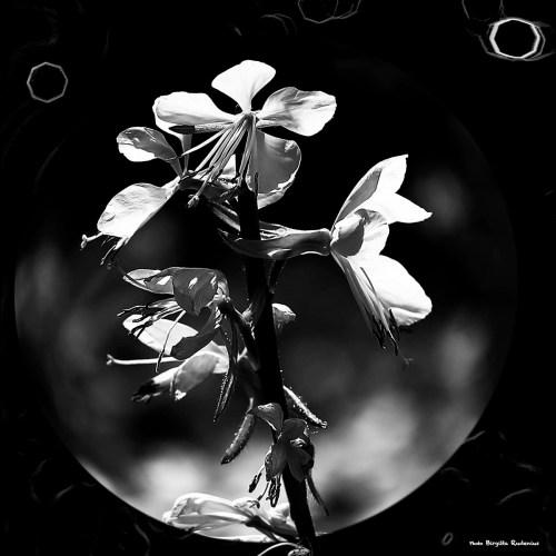 500px_20140623_bwbowlweb