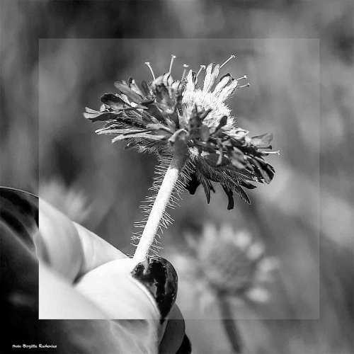 bw_20140602_flower32
