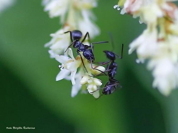 macro_20140717_ants