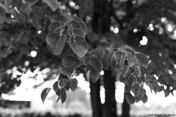 bw_20140803_tree