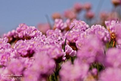 blom_20120505_trift[2]