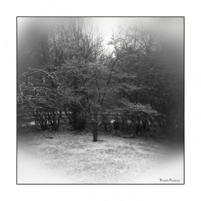 bw_20150124_wintertree