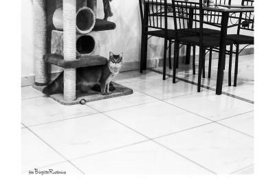 cat_20150106_cafe
