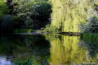 tree_20140524_weepingwillow